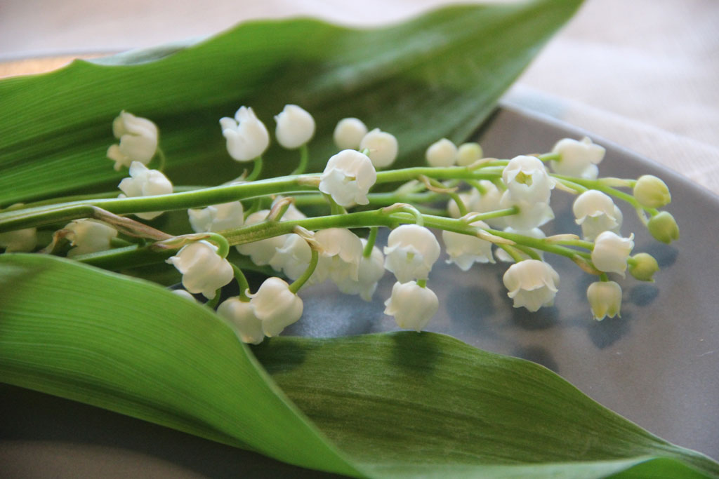 financiers-muguet2